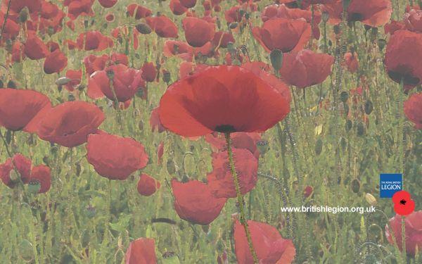 Stylised Poppy Field